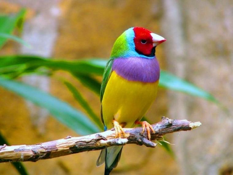 birdWDF_1076070