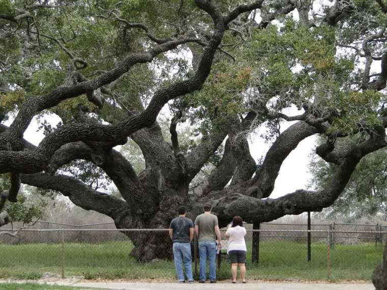 tree1024x1024