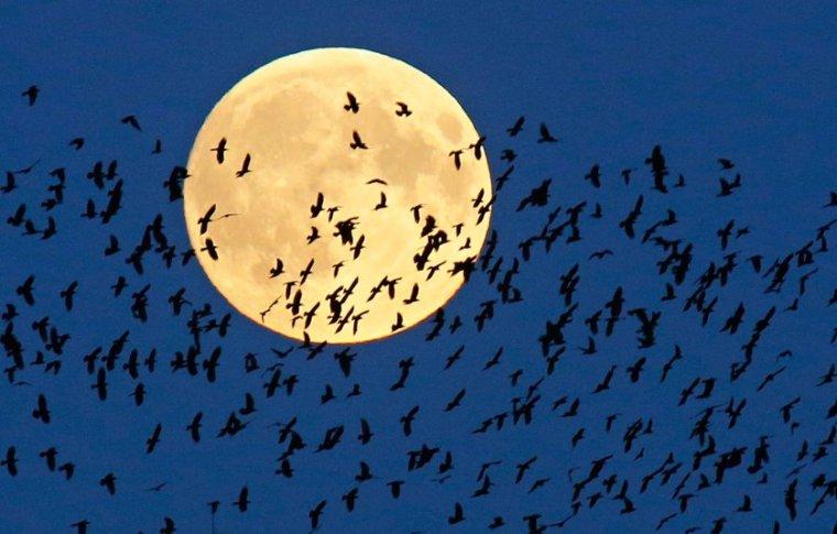 Belarus Supermoon Lunar Eclipse