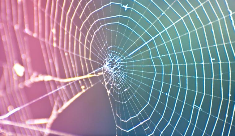 spider-web-01