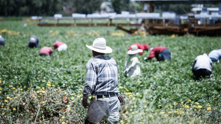 Mexican_Fruit_Pickers_(7618119180).jpg