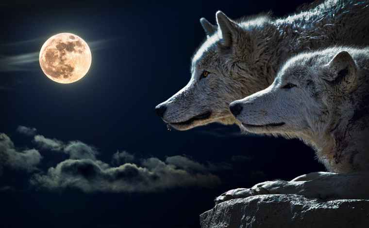 wolf-torque-wolf-moon-cloud-45242.jpeg