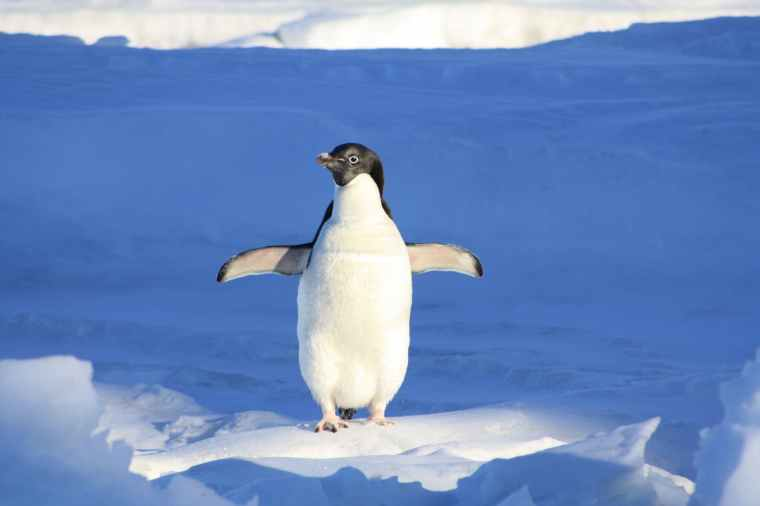 penguin-funny-blue-water-86405.jpeg