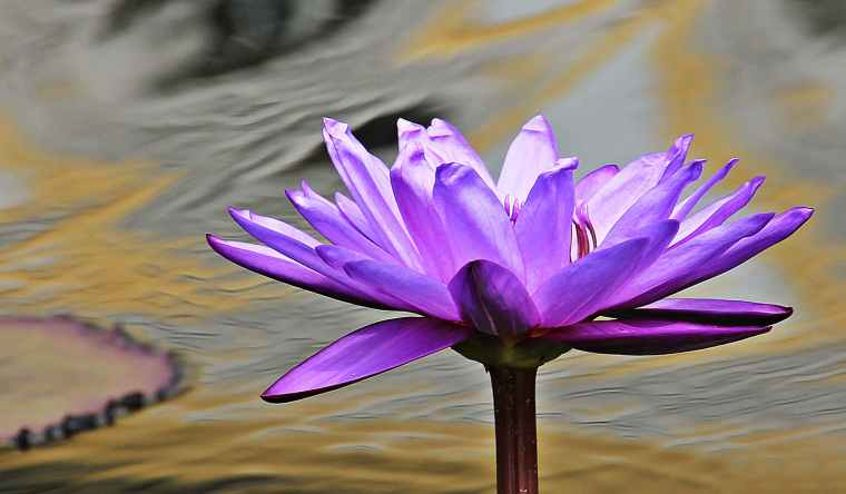 close up photo of purple petaled flower