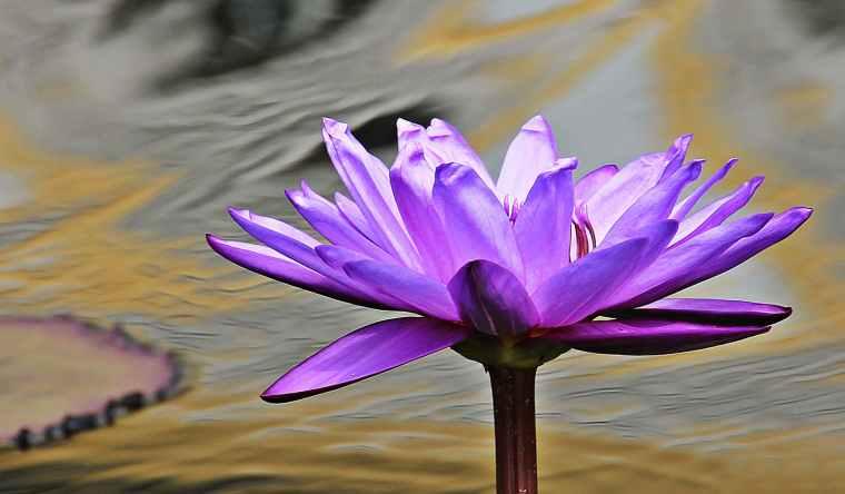 close up photo of purple petaled flower