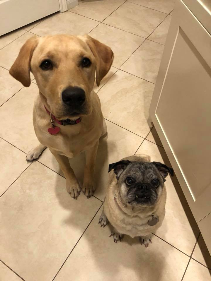 Cooper and Luna