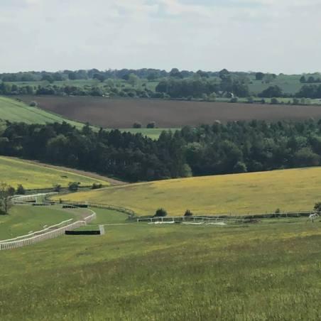 Fields of Cotswolds