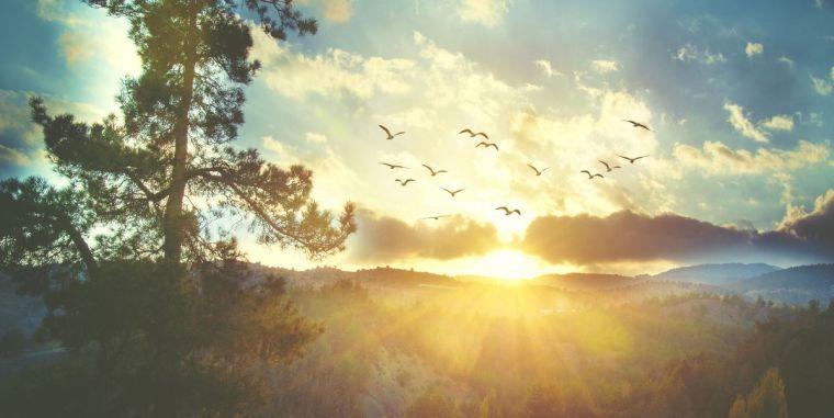 beautiful-sunset-sky-with-birds-royalty-free-image-865856136-1547059564